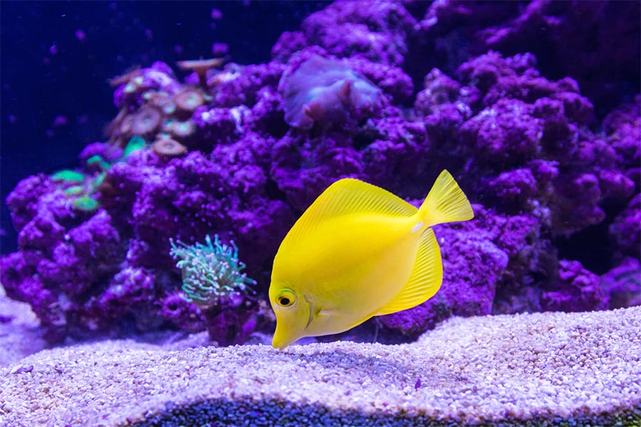 saltwater aquarium care