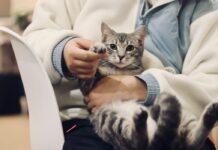 Pet Insurance Plans